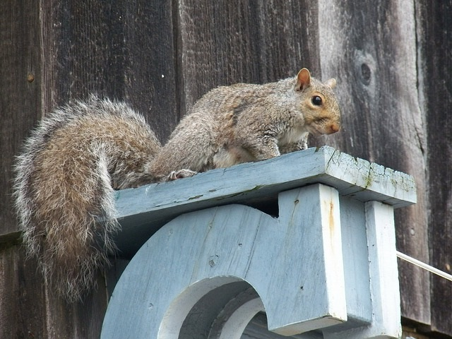 Squirrel Removal Myths