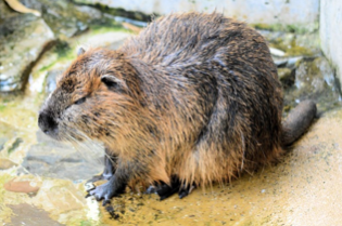Problems Associated with Beavers