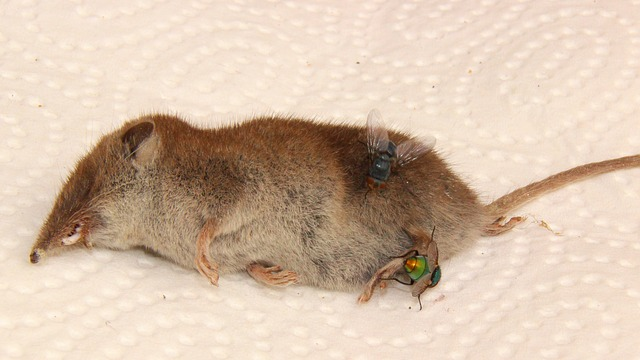 dead animal that can be removed by Palmetto Wildlife Extractors