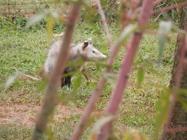 How to Keep Possums Off Your Property