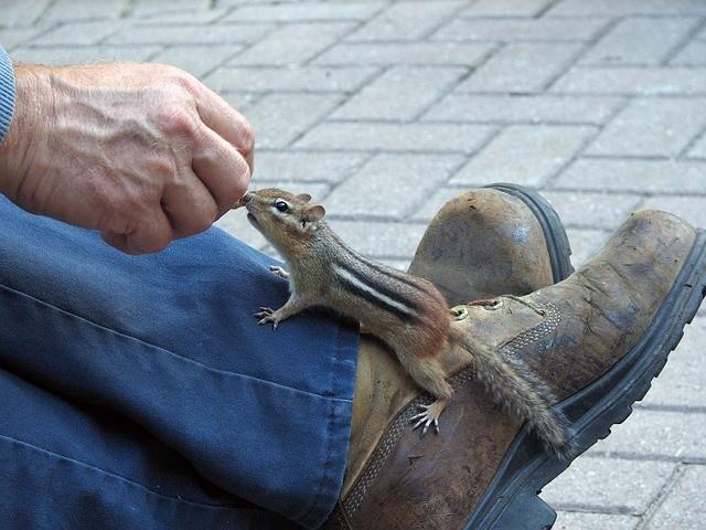 Squirrels Diseases
