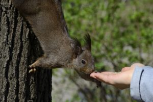 Dealing with Wildlife in a Humane Way