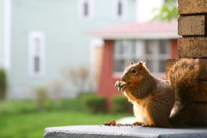 Keep Squirrels from Taking Over Your Home