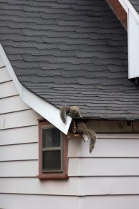 Beware of Animals Nesting in Your Home This Fall