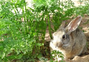 5 Strategies to Keep Animals from Eating Your Garden Plants