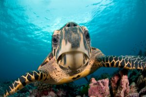 Interesting Facts You Should Know About Turtles
