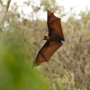 Things You May Not Know About Bats