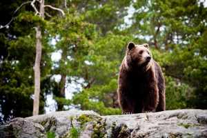 Things You Ought to Know About Bears