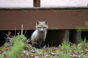 Ways to Handle Nuisance Wildlife