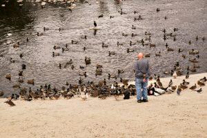 Parks Seek Help to Control Wildlife