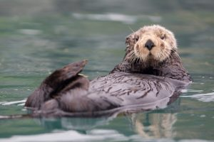Interesting Facts About Sea Otters