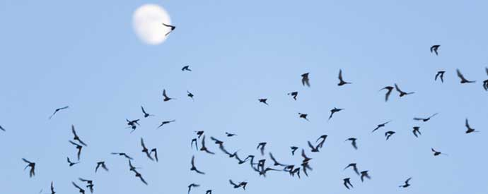 Bats Found in South Carolina