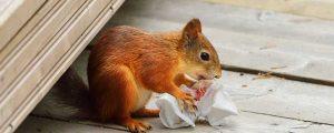 Squirrel Removal South Carolina