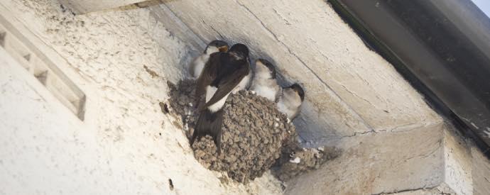 Birds Nest On Property