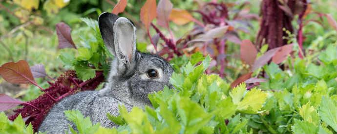 Rabbit In Spring Garden