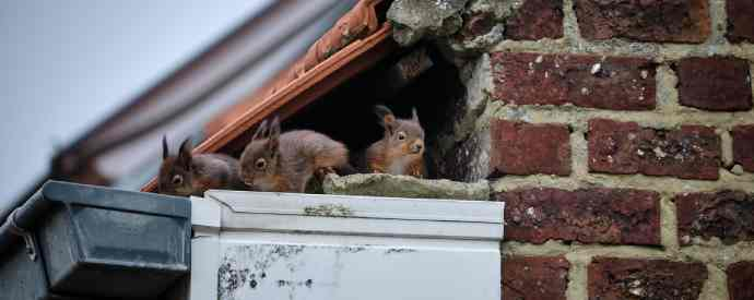 Squirrels Getting In Home