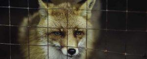 Wildlife Remediation